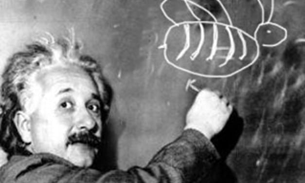 Don't Be Stupid… Work Like a Genius