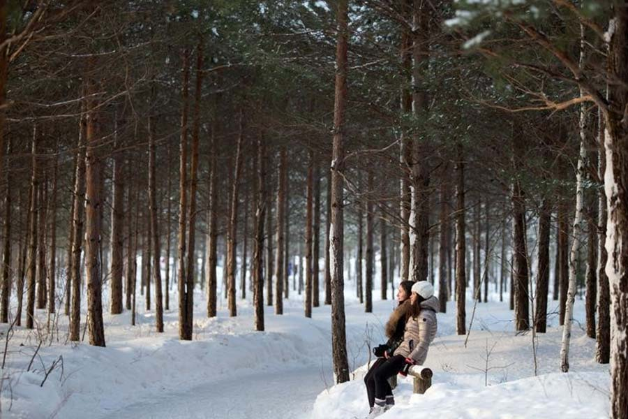 US Law Firm Employs Anti-mafia Laws to Sue Forest Activists