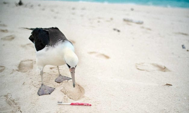 Heed The Ancient Mariner: Stop Dumping Plastic in The Ocean