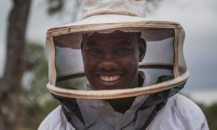 Using Bees to Save Trees and Elephants