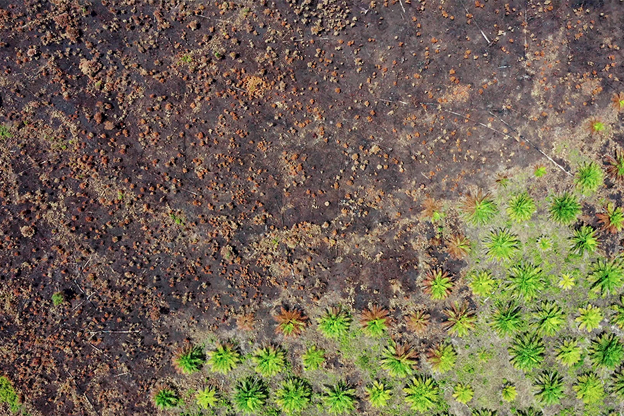 8 Reasons Why Palm Oil Deforestation is a Disaster For Our Planet (And Its People)