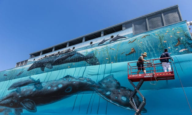 The Artist Who Challenges City Mayors to be Water-wise
