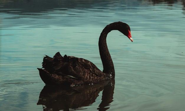 How do you Make a Black Swan Green?